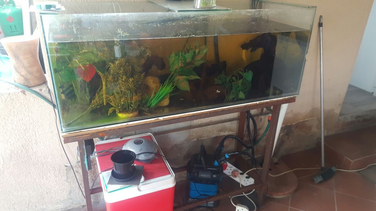 3x Fish Tanks For sale