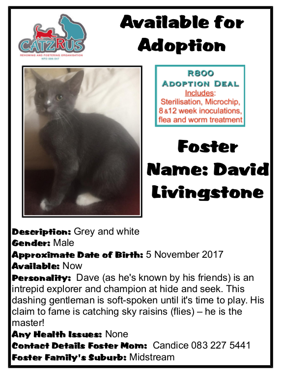 Meet David Livingstone and become part of his life-adventure by adopting from CatzRUs - registered rescue and foster care.