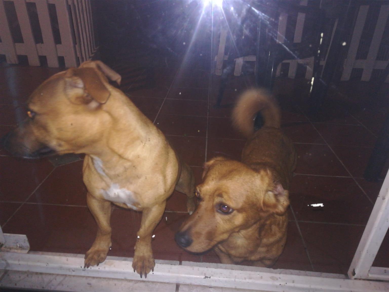 2 Hondjies wat n ander goeie huisie moet kry