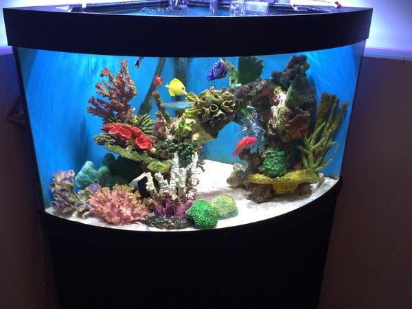 Marine Fish Tank For Sale - Juwel Corner