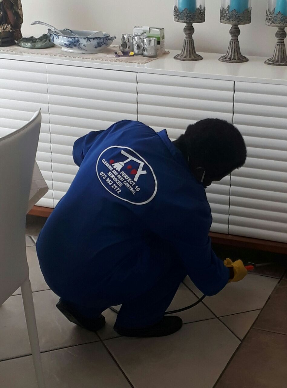 Pest Control and cleaning Services