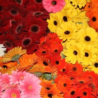 Flowers For Weddings, Functions Or Just for Home ! We supply direct to the public