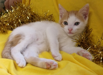 Sully - the purrfect kitten for any cat-loving home. R750 incl sterilisation, inoculations at 8 and 12 weeks, micro-chip...