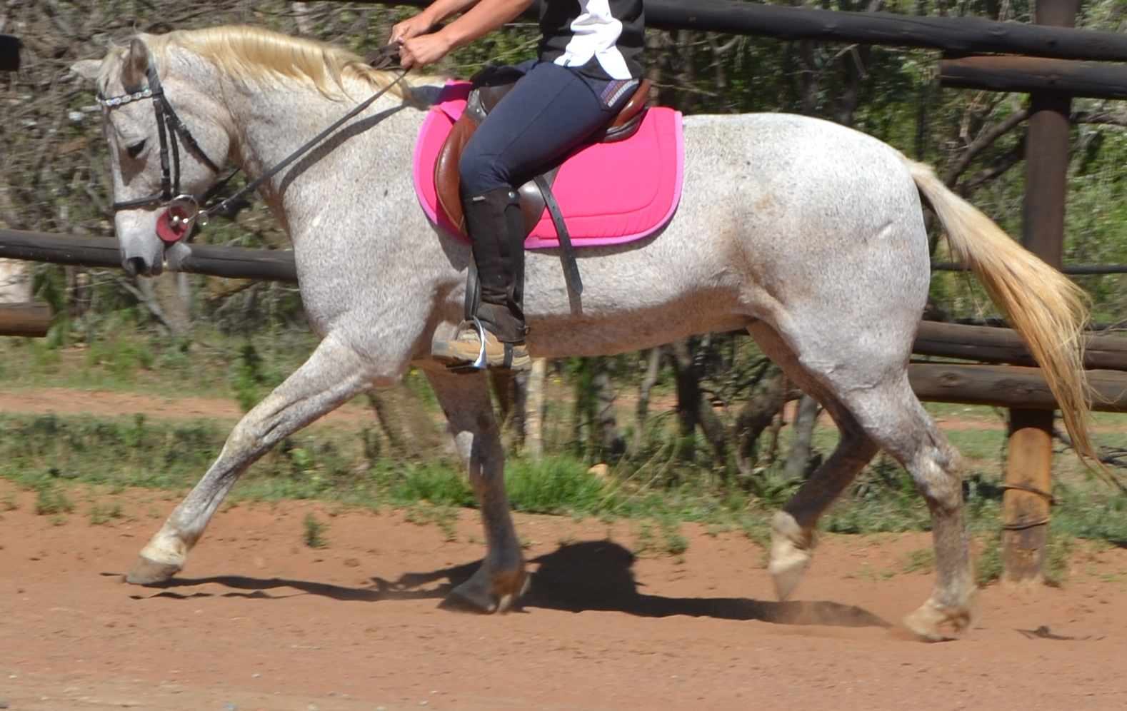 Super Competition Pony for Sale