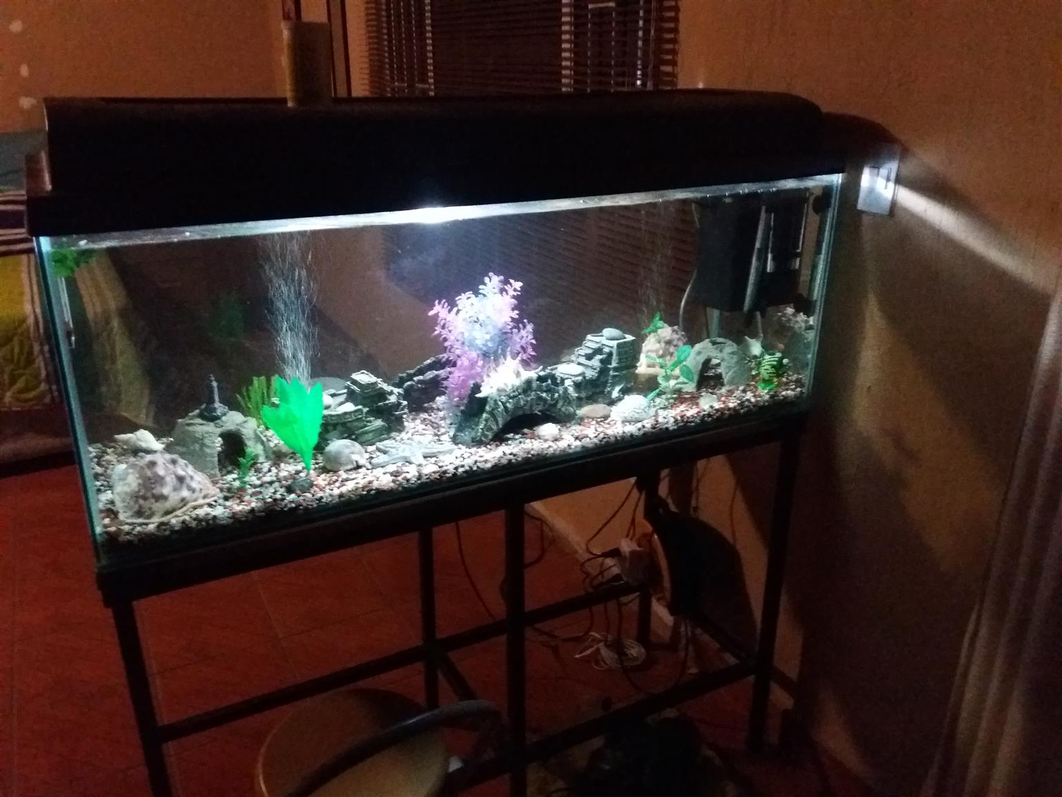 4ft complete fish tank setup