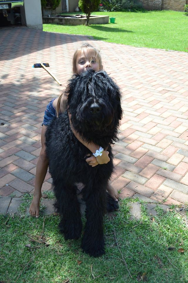 BLACK RUSSIAN TERRIER PUPS FOR SALE