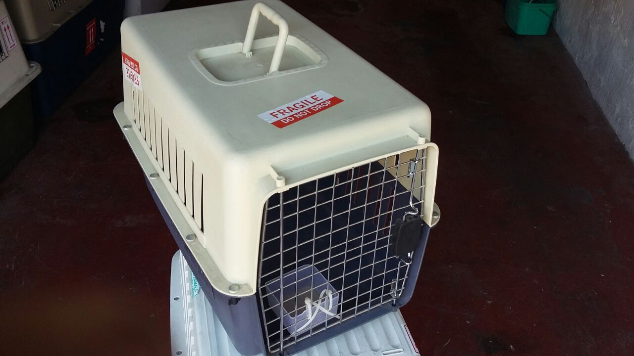 Pet Transport and Carrier Rental Service
