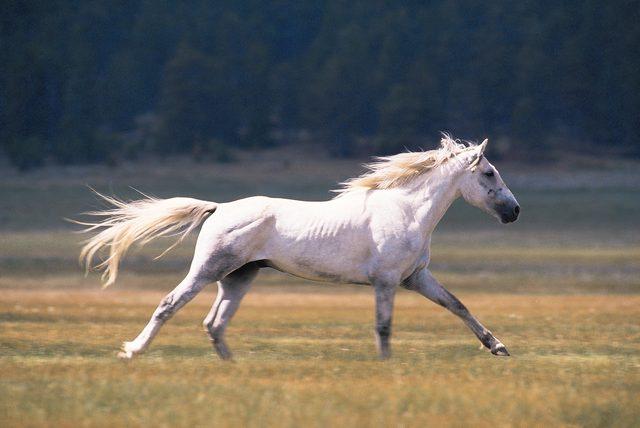 Equine Reiki Course