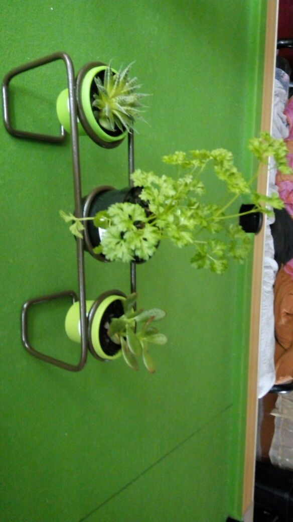 Flower and herb stands