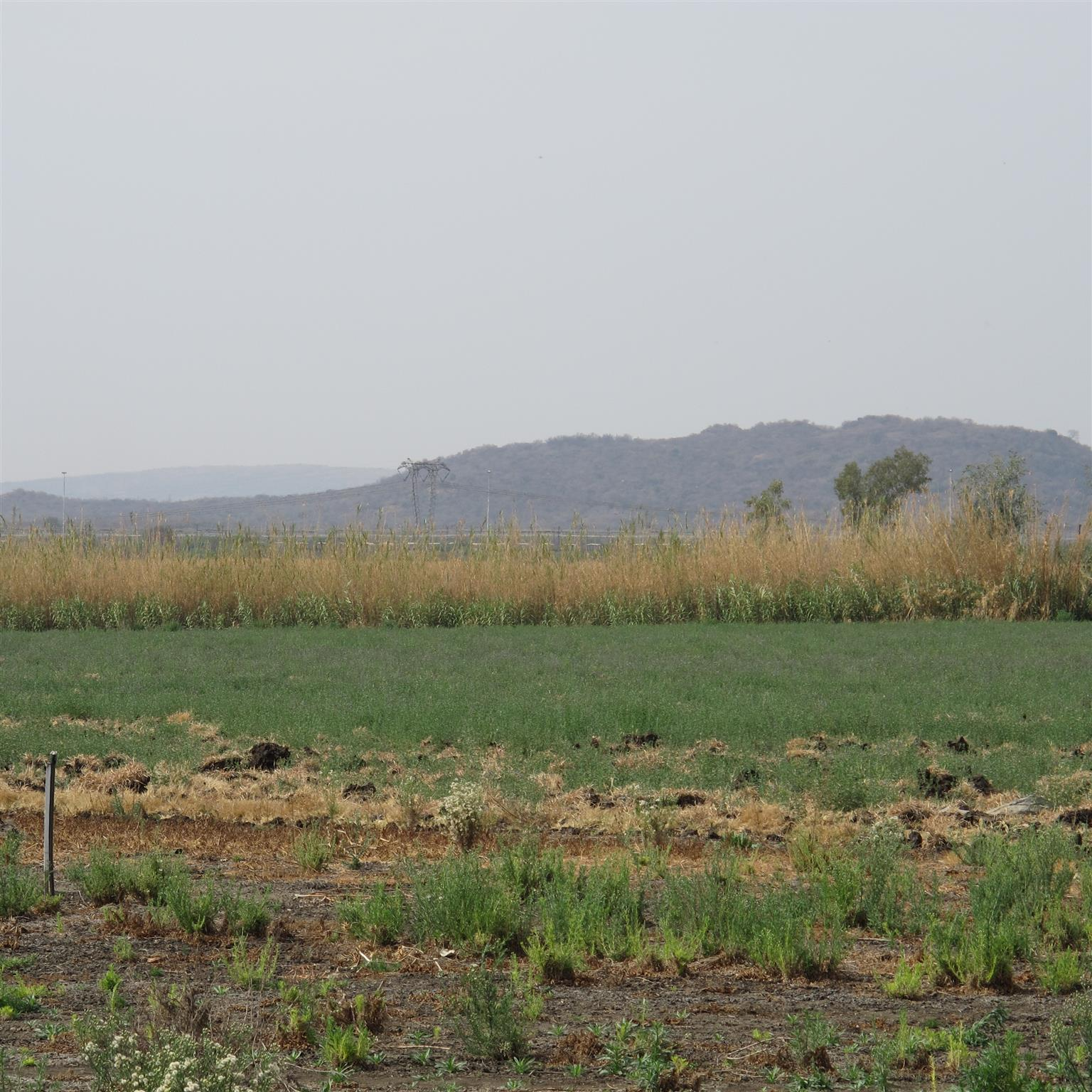 Bon Accord Irrigation land.