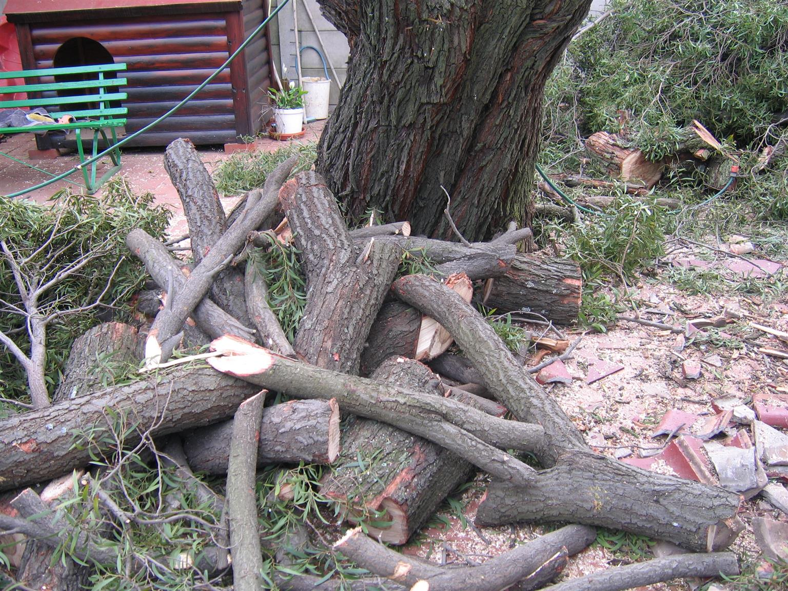Tree Felling services all areas of Gauteng