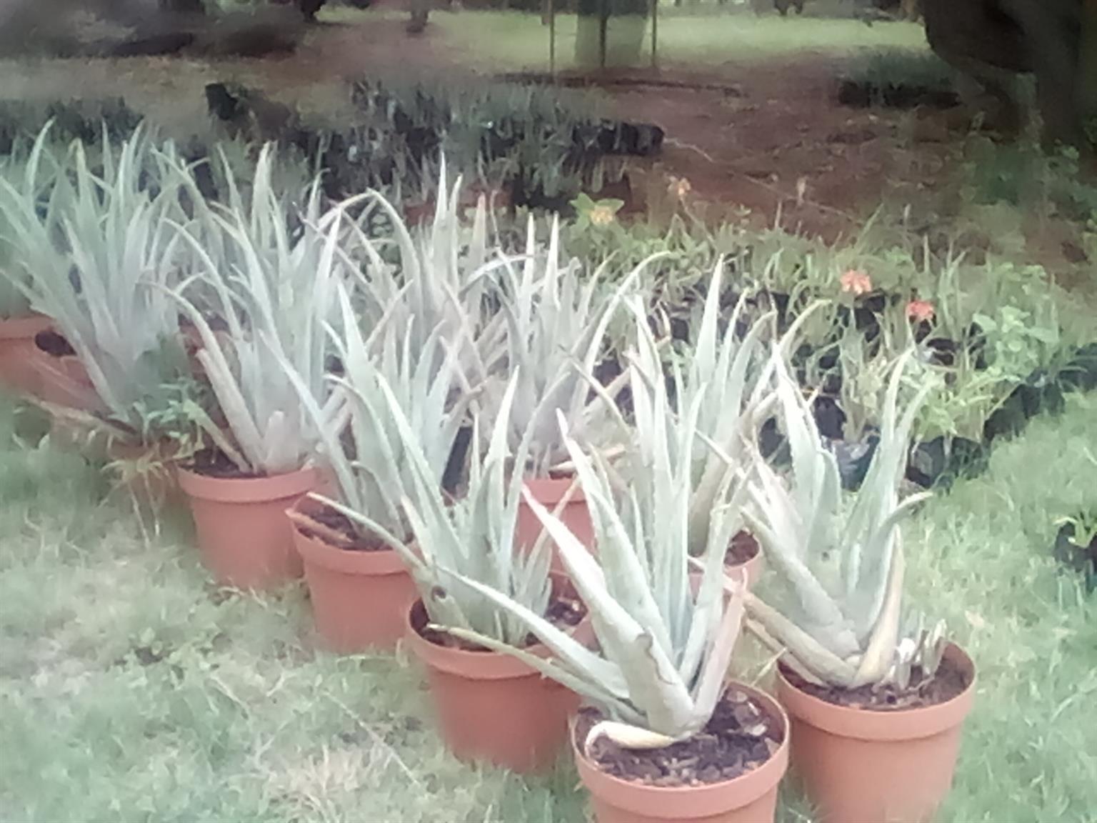 Rocky top nursery PLANT SALE Plants from R 20