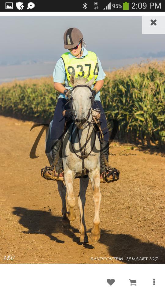 Endurance horse