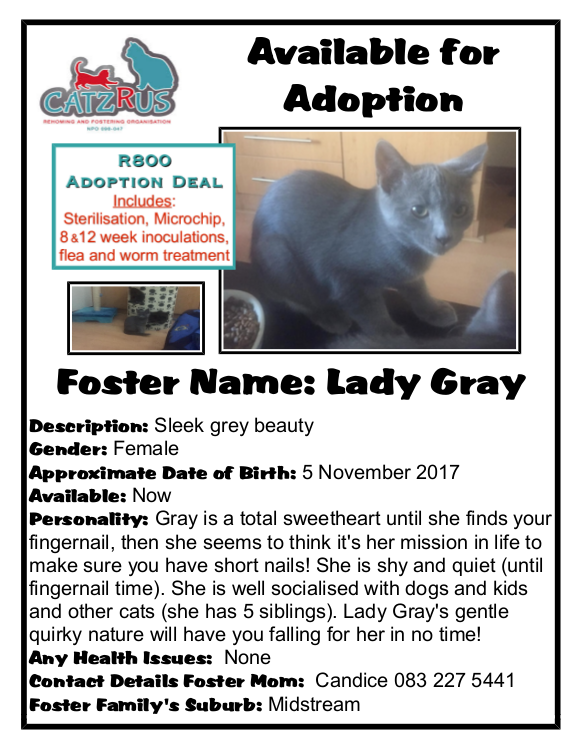 We specialise in fairy-tale endings. Meet Lady Gray and let her win your heart!  - The CatzRUs Rescue Team