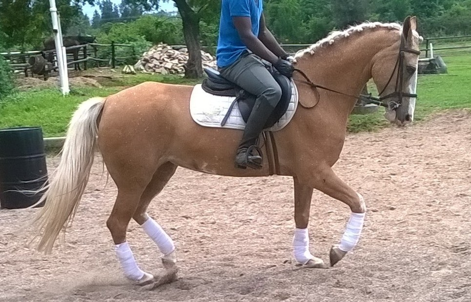 Pretty palomino pony