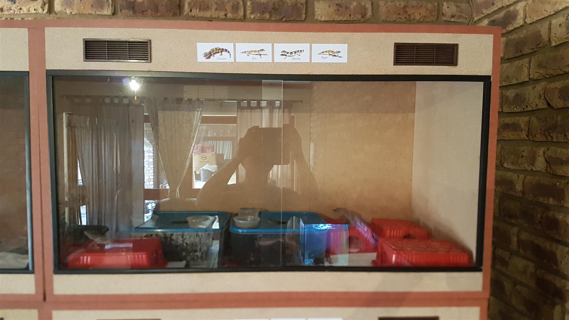 Leopard Gecko Combo Setup