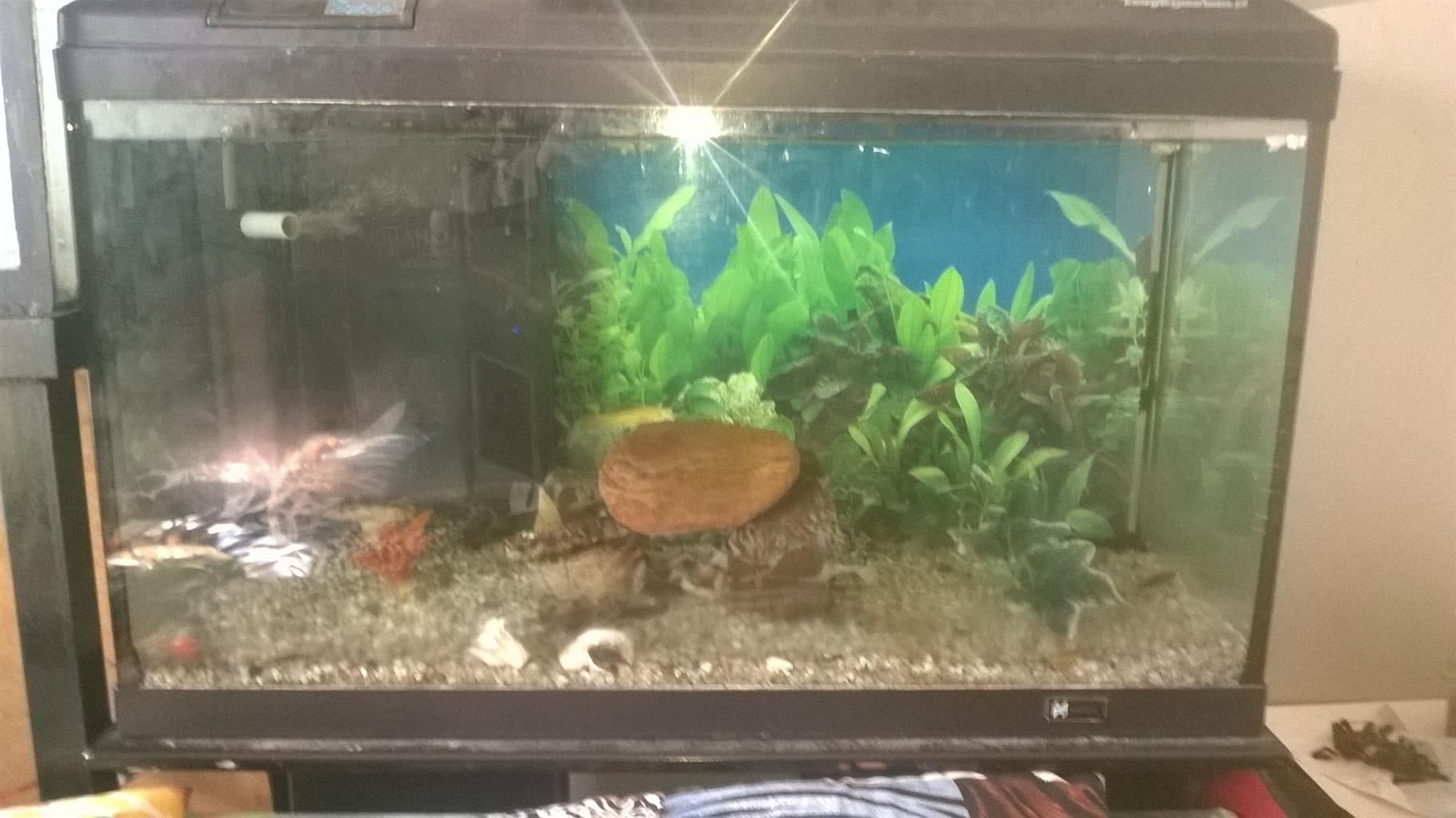 bargain fish tank with accessory's