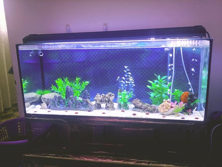 3 ft aquarium