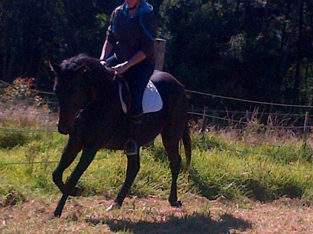 Bomb proof riding horses