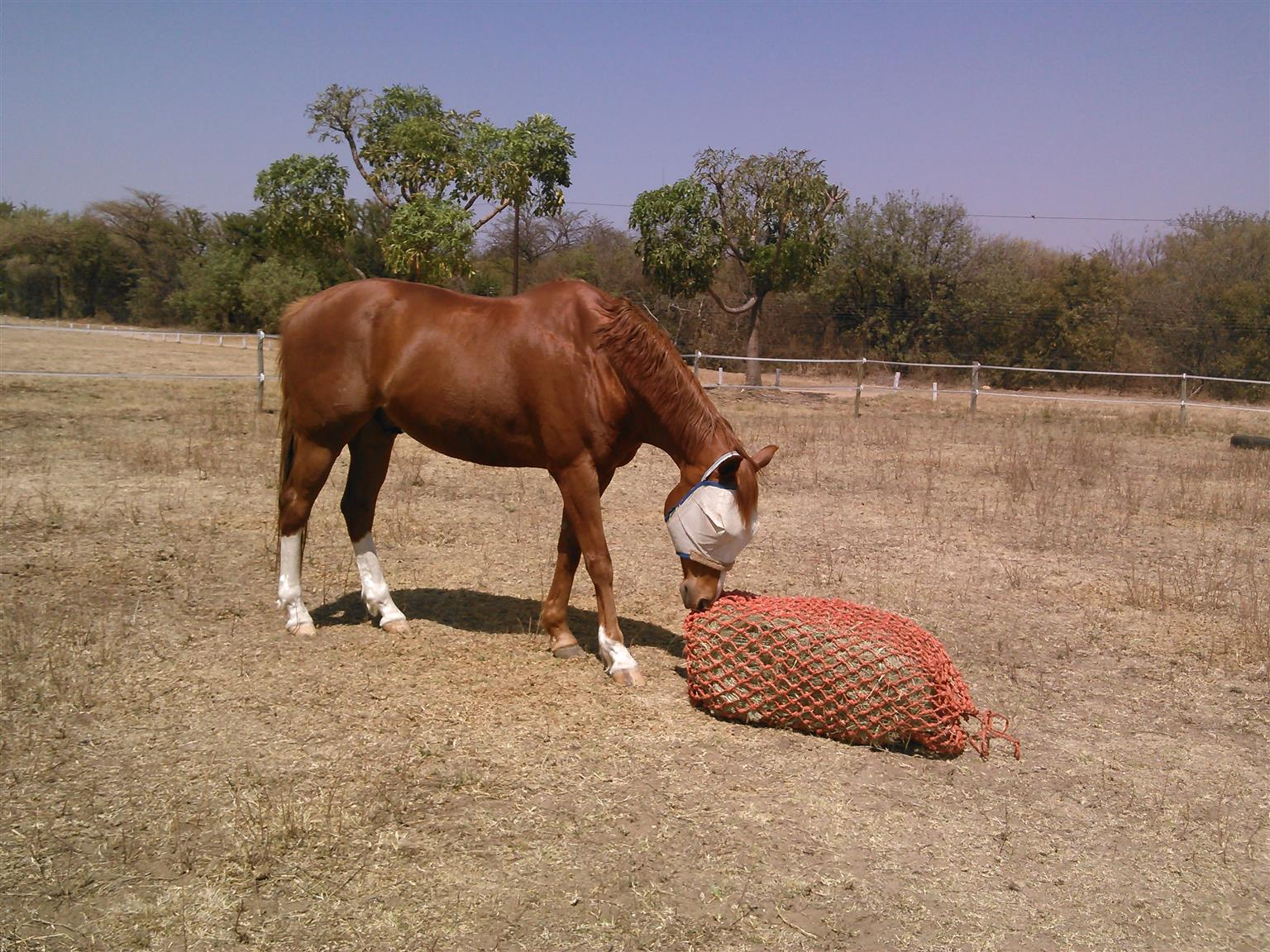 Special offer R50 large slow feeder haynets