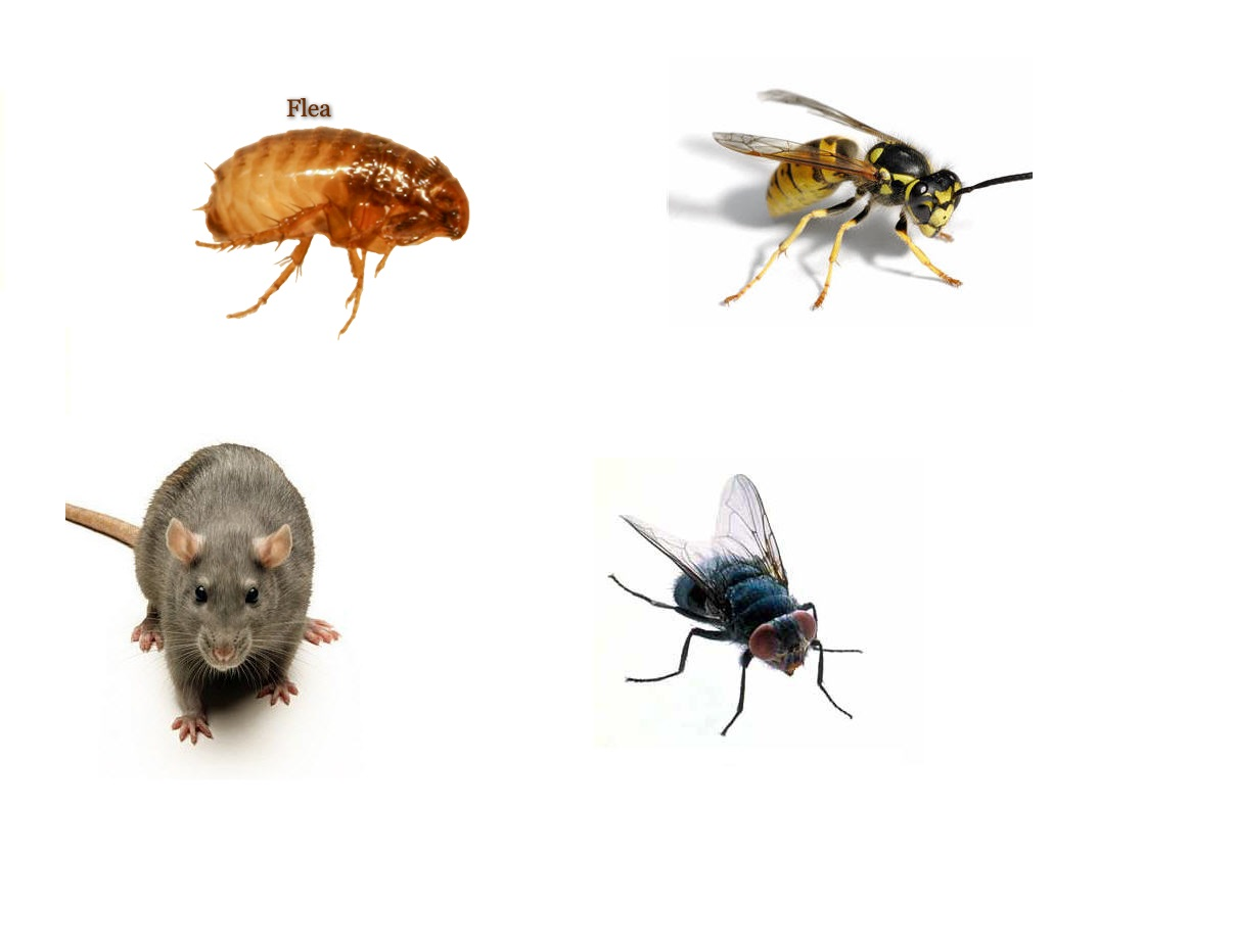 Pest Control from R400 and COC from R400, Cape Town