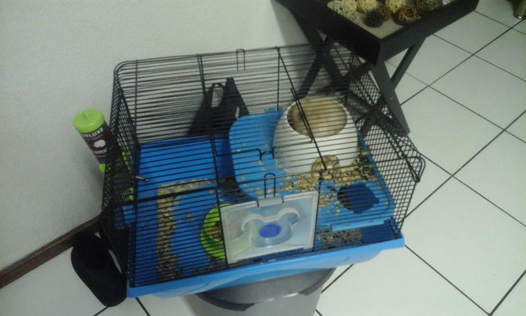 CUTE GOLDEN BROWN HAMSTER FOR SALE
