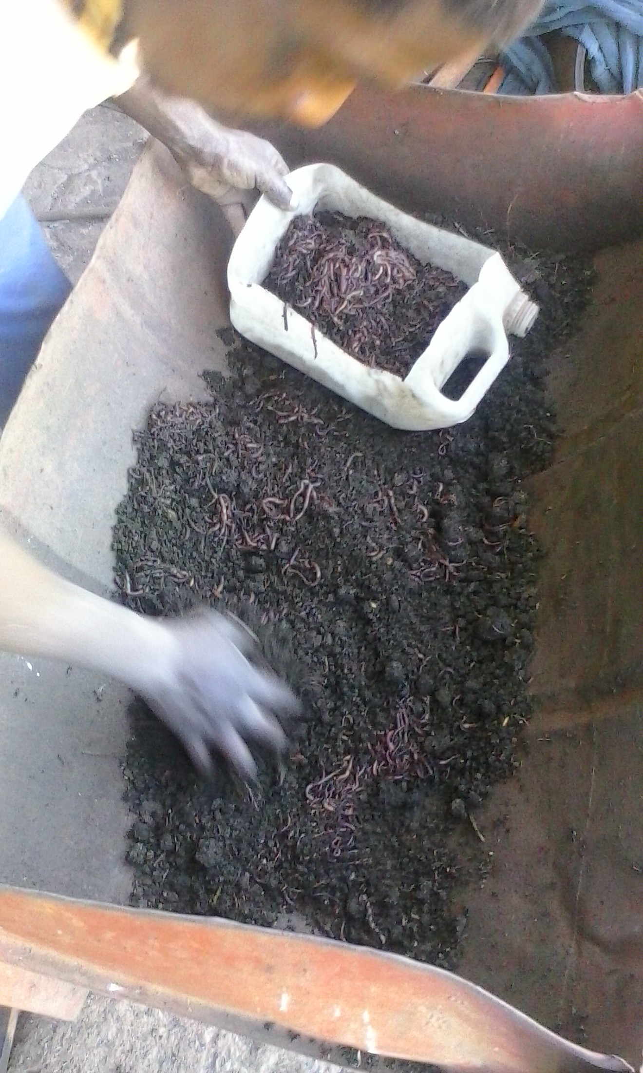 earthworms and vermi compost for sale in bulk