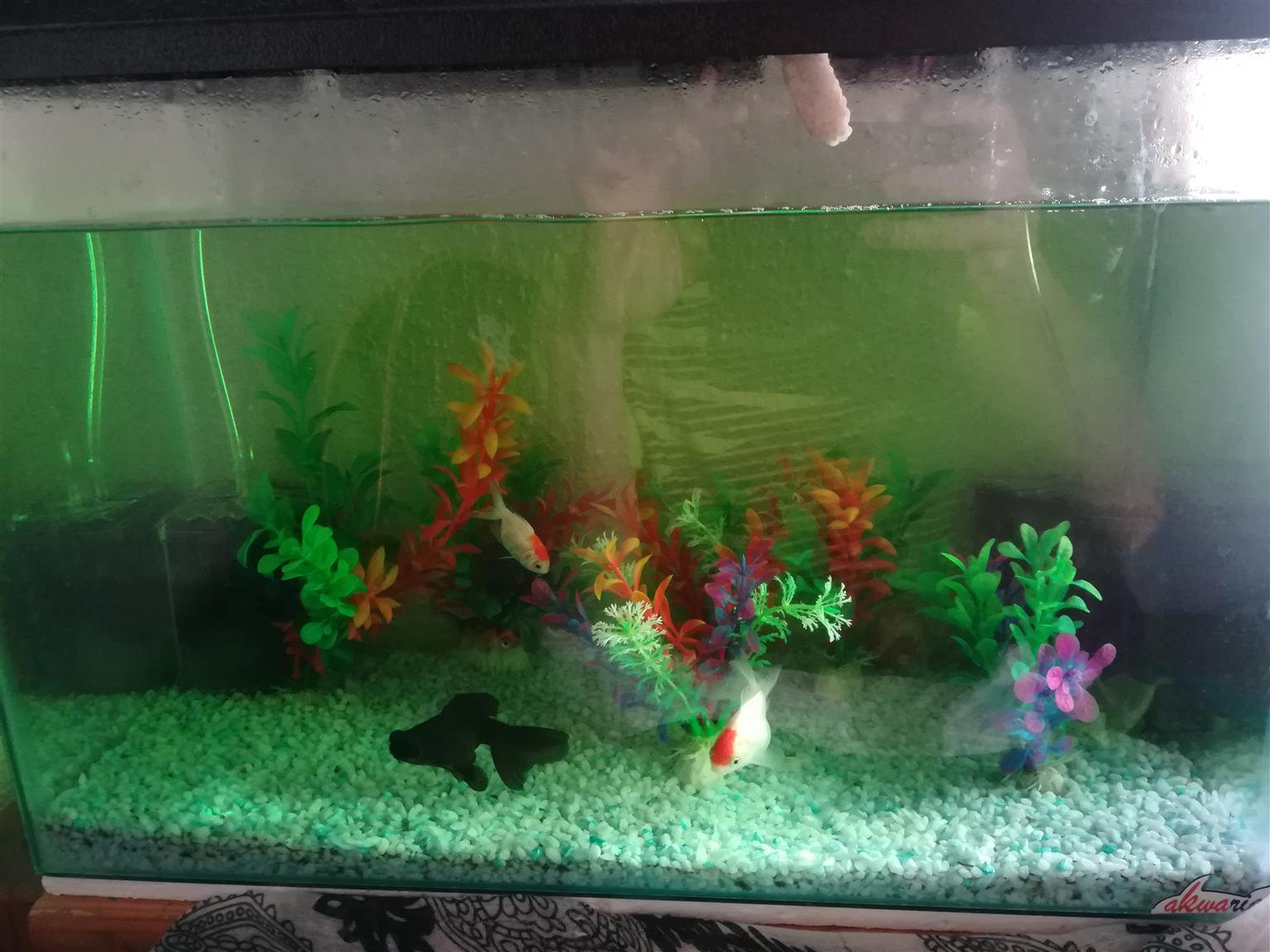 All inclusive fish tank