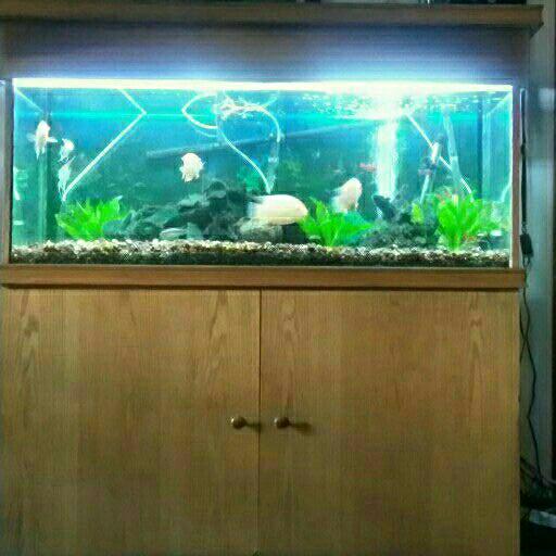 1,2m Tropical Aquarium