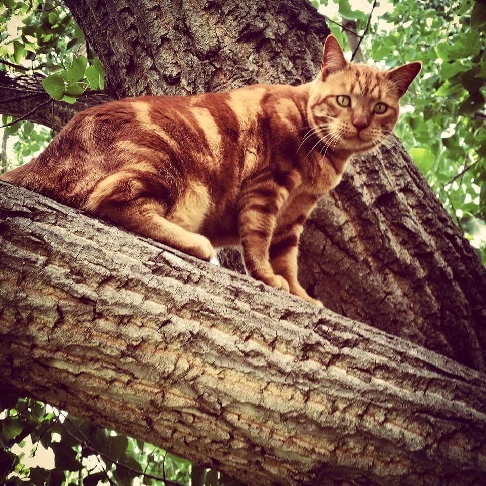 Missing Cat - R1000 reward.