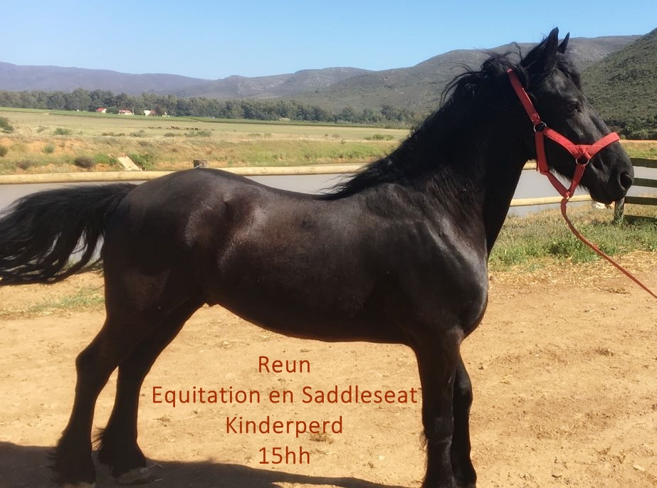Childrens Horse - Friesian