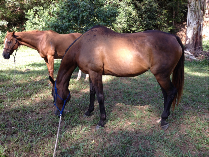 2 X beautiful mares for sale