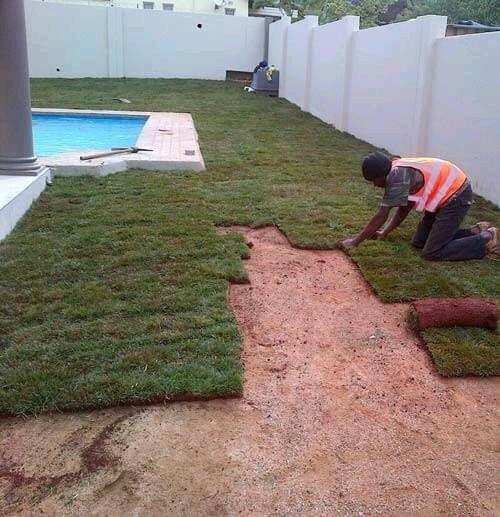 Instant Lawn-Kikuyu,LM & Evergreen:0781043453