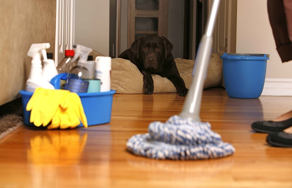 Cleaning services done by the best for you!