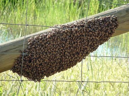 Free Bee Removal/Relocation