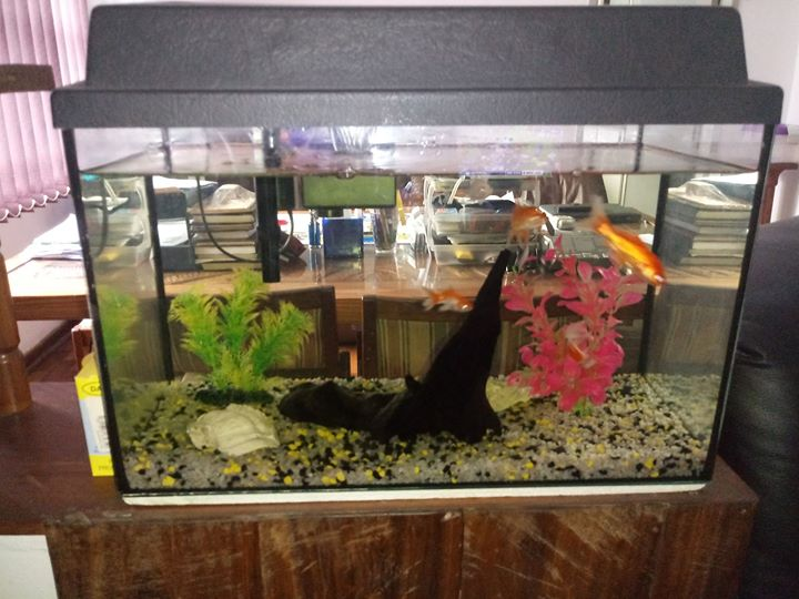 Fish Tank 25 Lit With Decorations Filter Junk Mail