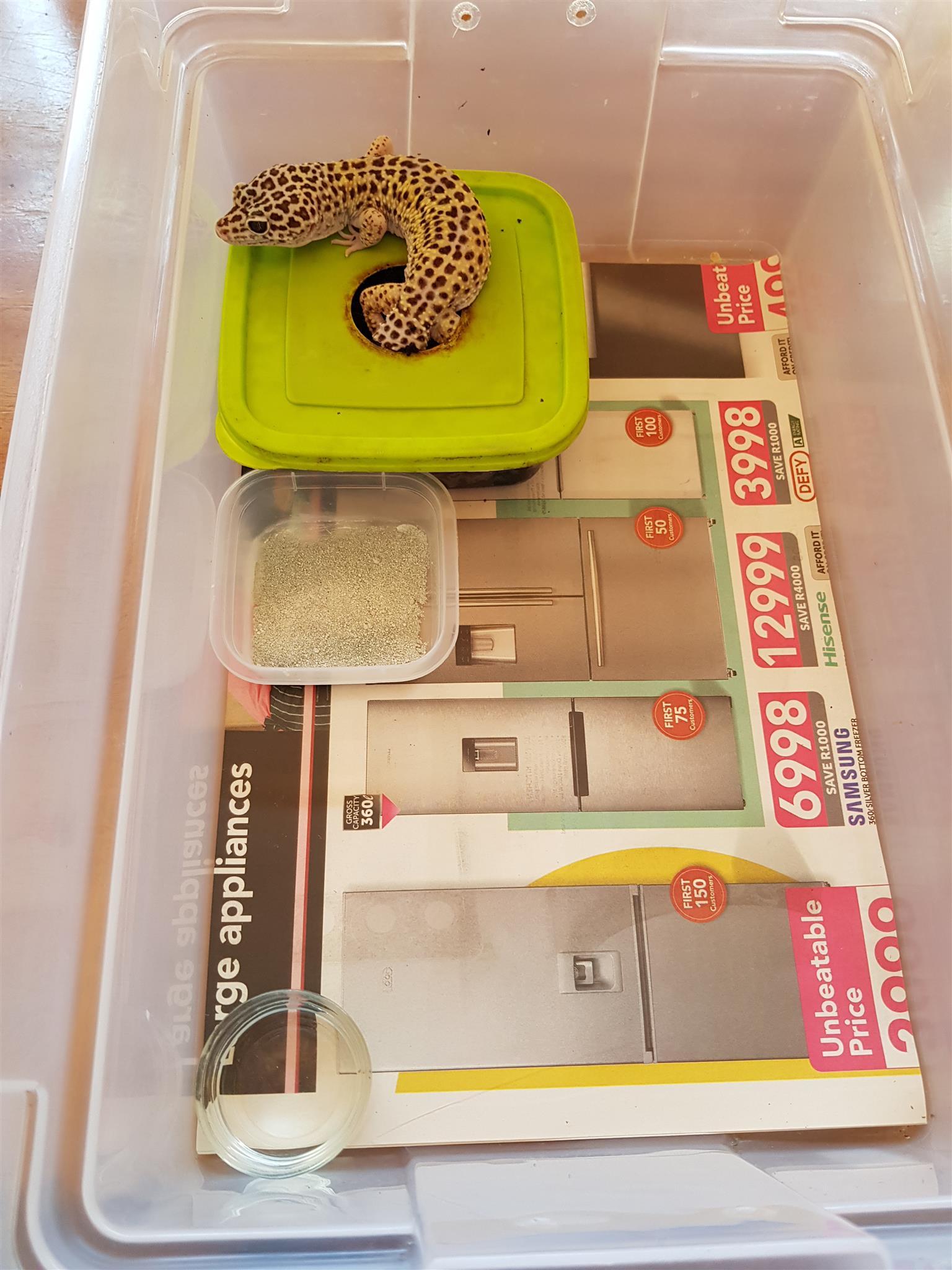 Leopard Gecko Full Setup