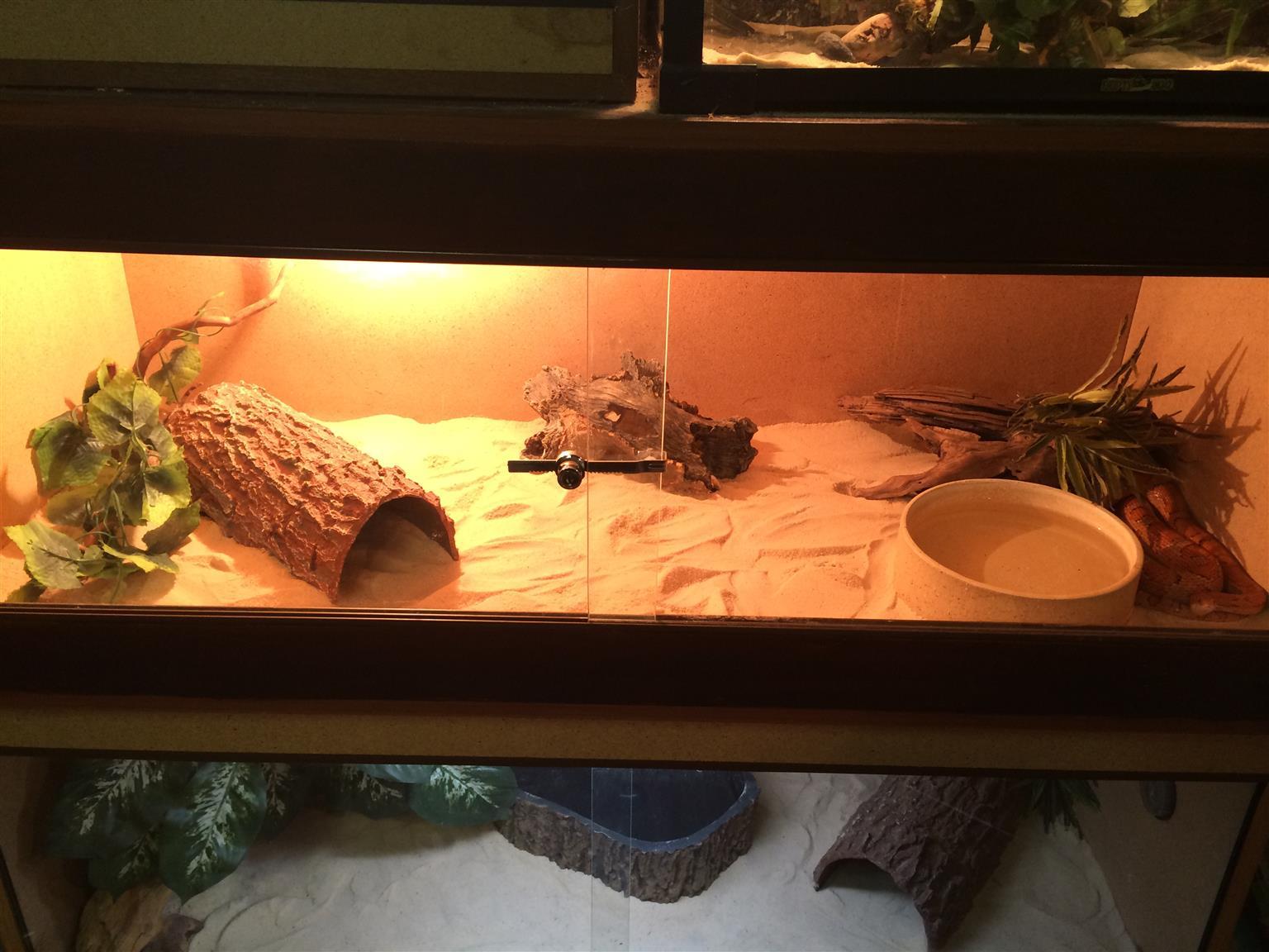 Reptile Enclosures for Sale!!!