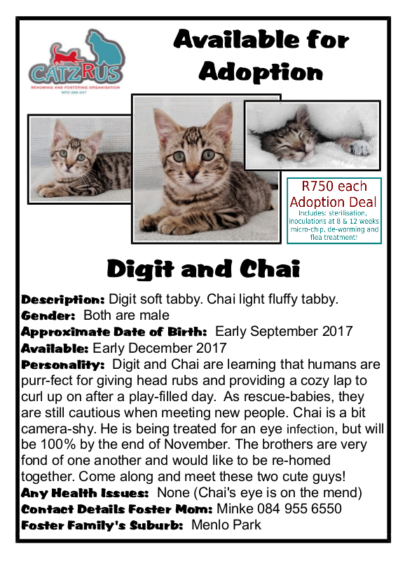 Adopt responsibly - All our rescue-cats are sterilised, microchipped, fully inoculated and dewormed before re-homing at 13 weeks