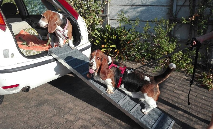 Dog ramps and steps