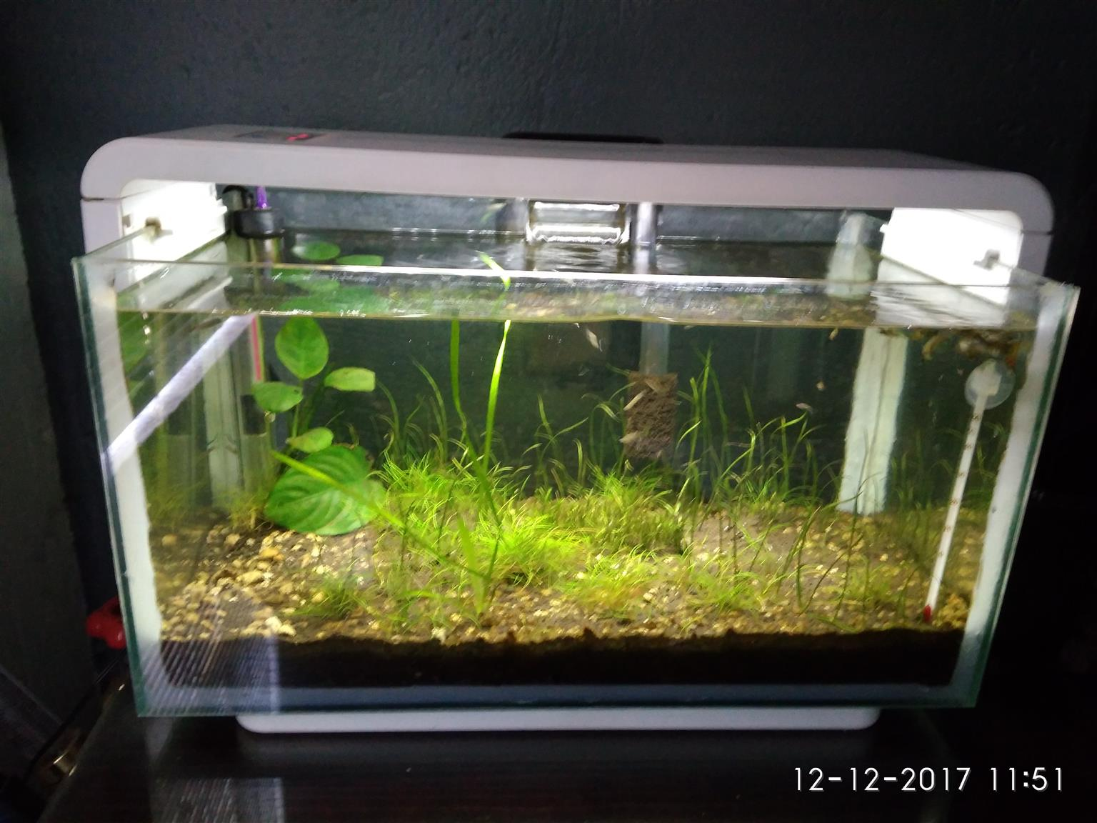Hailea E25 Fish Tank