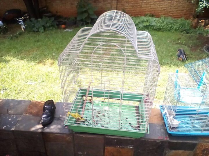 White bird cage for sale