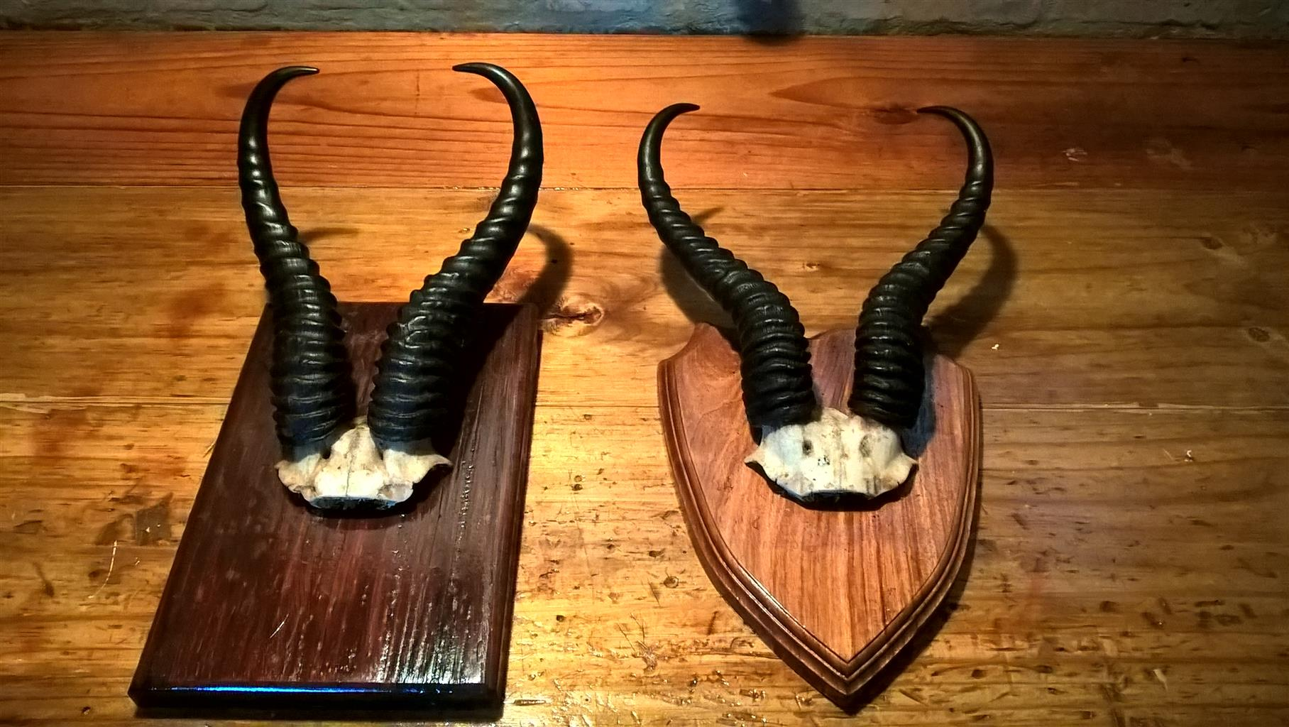art decor horns mounted on shield