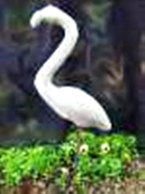 Beautiful Flamingo's & ornaments birds for sale!!