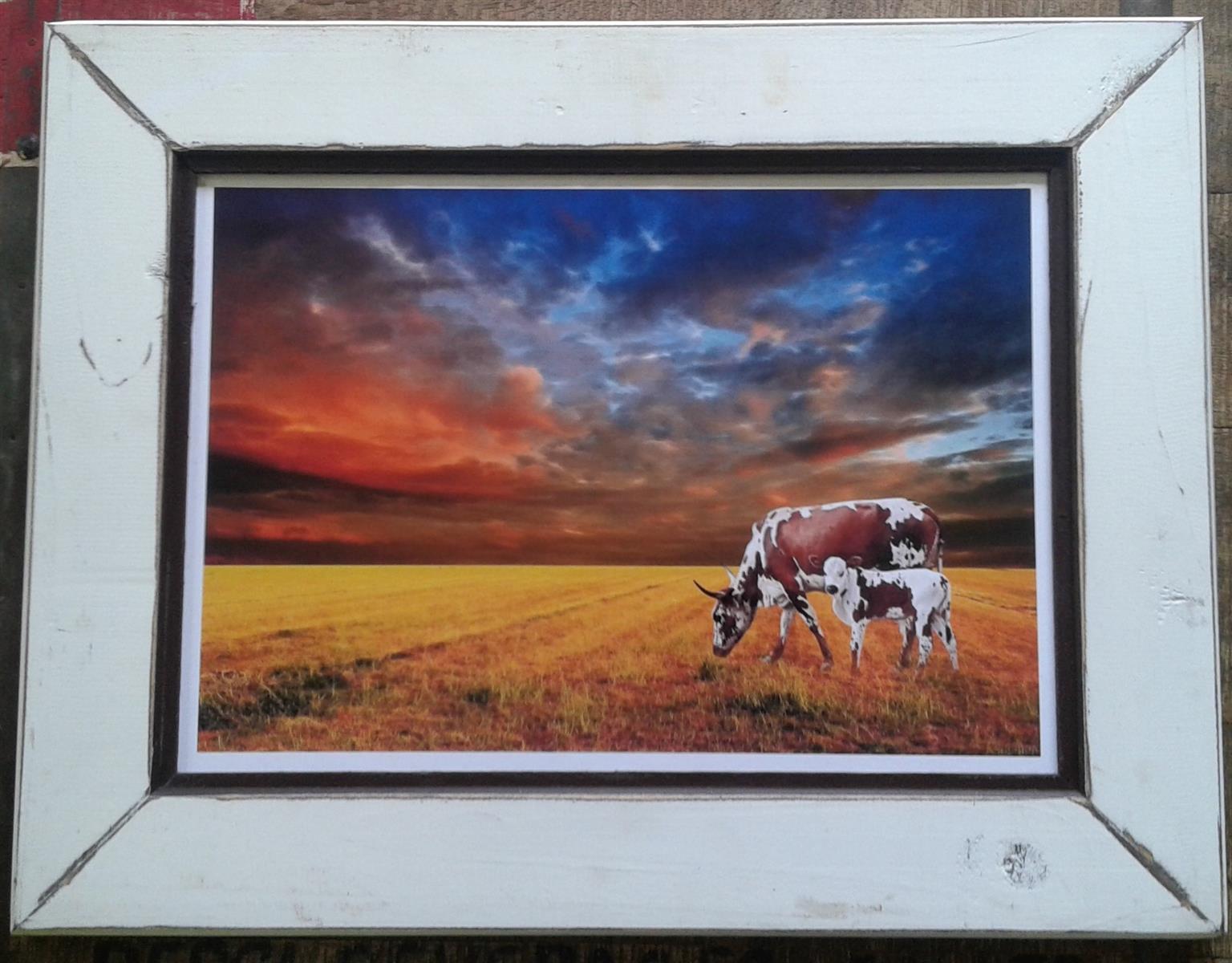Framed Print: Nguni Cattle. Home decor. Art