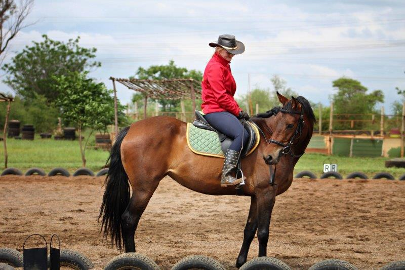DRESSAGE & SHOW JUMPING MARE FOR SALE