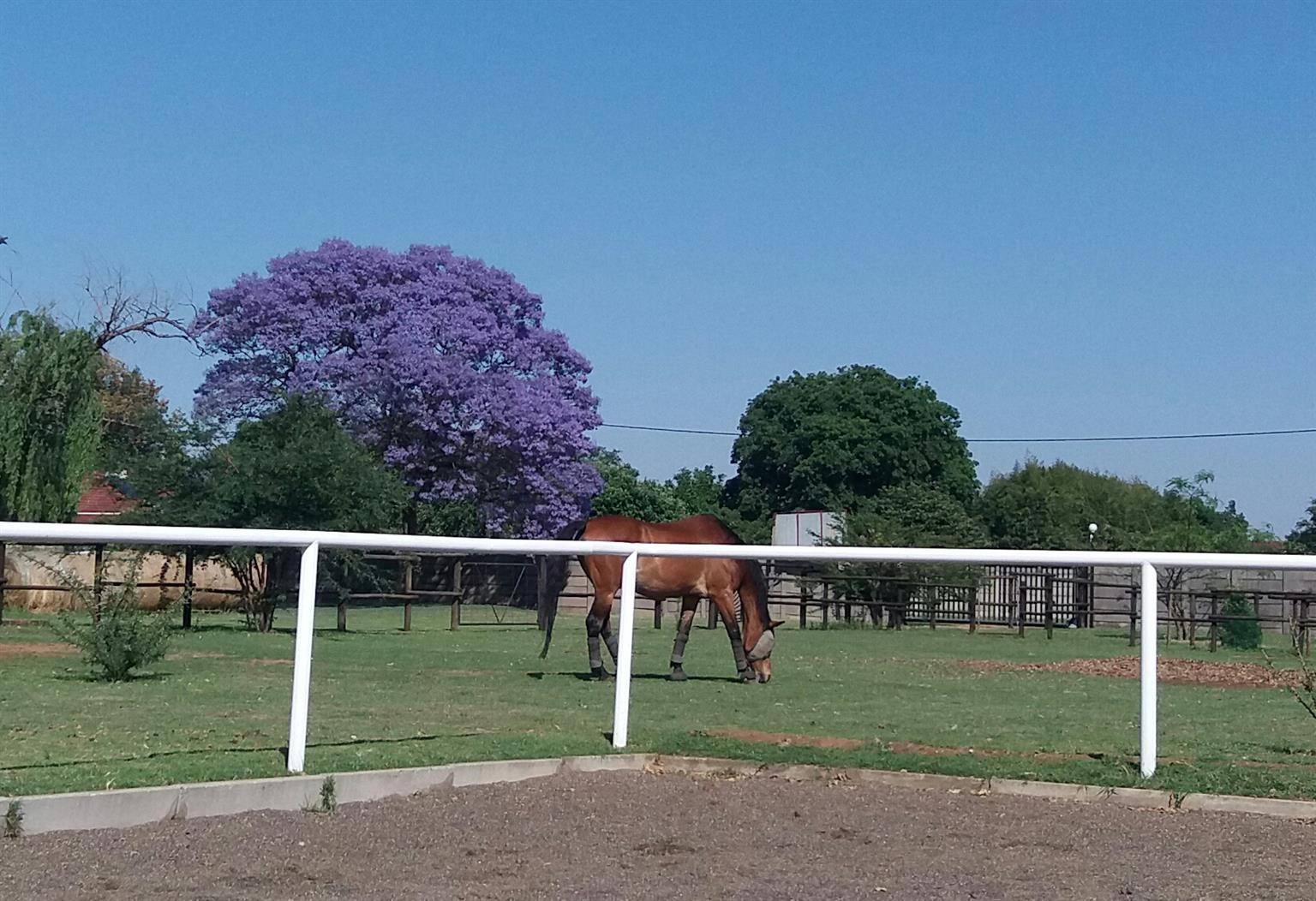 Stabling available in private yard