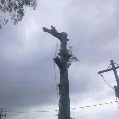 IZITHELO TREE FELLING & STUMP REMOVAL