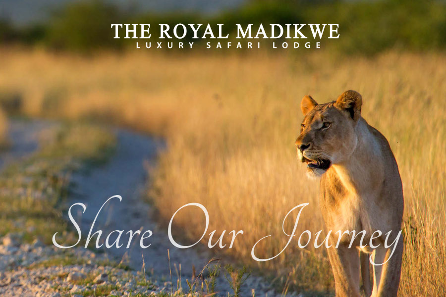 Safari Lodge South Africa | The Royal Madikwe