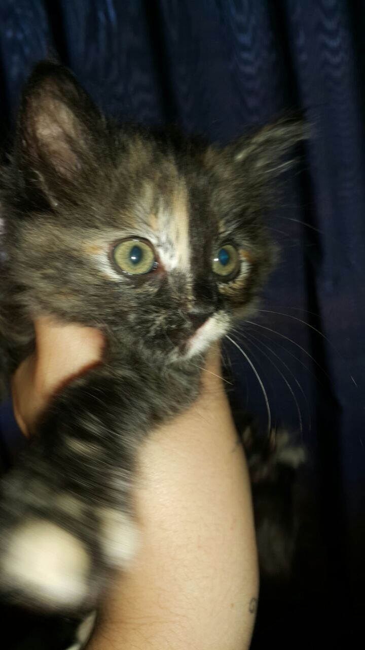 Kitten for good home